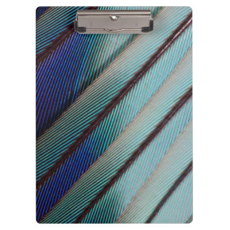 Blue Lilac Breasted Roller feather Clipboard