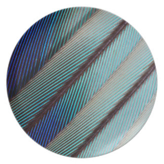 Blue Lilac Breasted Roller feather Dinner Plate