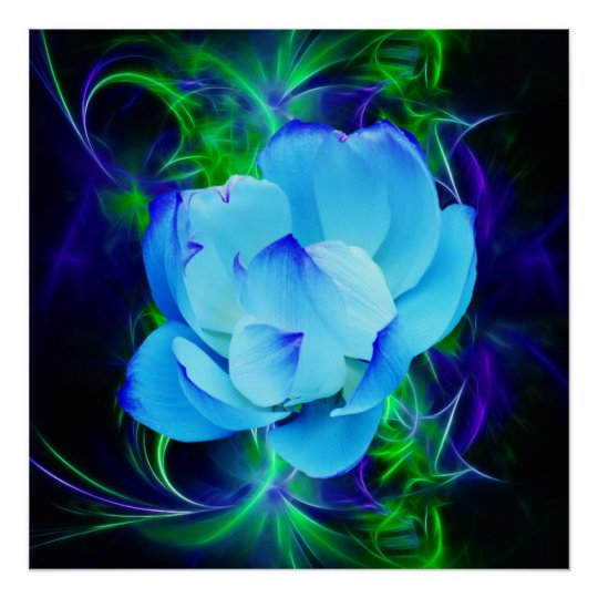 Blue Lotus Flower And Its Meaning Poster Zazzlecouk