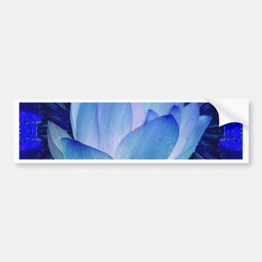 Blue lotus lily bumper stickers