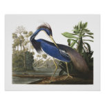 Blue Louisiana Heron Bird Illustration Poster