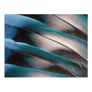 Blue Love Bird Feather Design Postcard