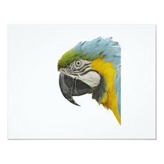 Blue Macaw Card