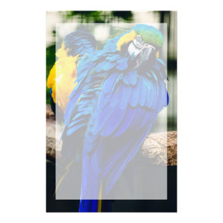 Blue Macaw Parrot, Exotic Tropical Bird Stationery