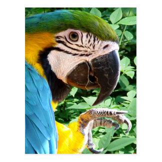 Blue Macaw Parrot Postcard