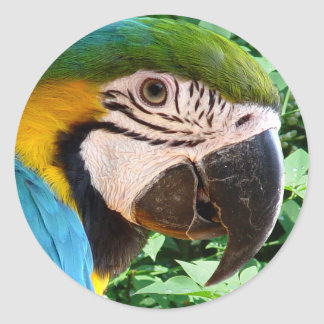 Blue Macaw Parrot Sticker