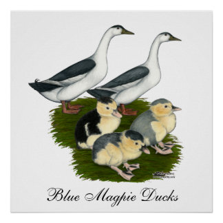 Blue Magpie Duck Family Posters