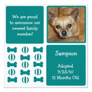 Blue Male Dog Photo Announcement Cards