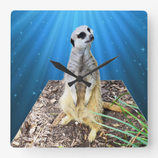 Blue Meerkat Night,_Square Wall Clock. Square Wall Clock
