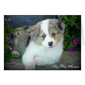 Blue Merle 3 Australian Shepherd Greeting Card