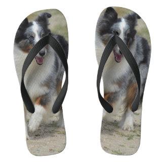 Blue Merle Australian Shepherd Flip Flops