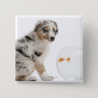 Blue Merle Australian Shepherd puppy 15 Cm Square Badge
