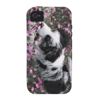 Blue Merle Border Collie iPhone case iPhone 4/4S Covers