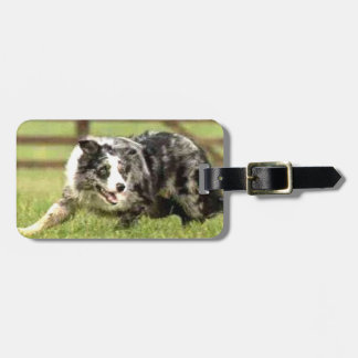 Blue Merle Border Collie Joe~Luggage Tag
