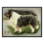 Blue Merle Collie Art Print
