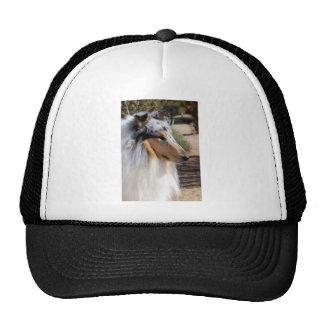 Blue Merle Collie Portrait Cap