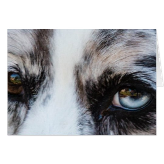 Blue Merle Dog Card