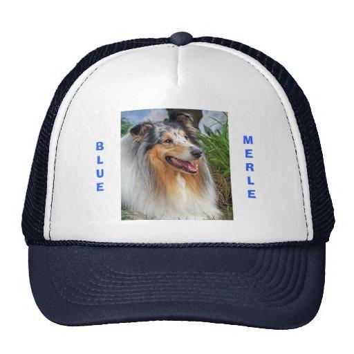 Blue merle rough collie dog  cap, hat