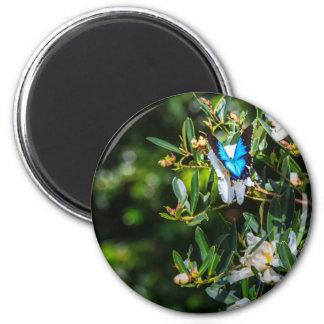 Blue Monarch Butterfly on Flowers Magnet
