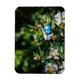 Blue Monarch Butterfly on Flowers Rectangle Magnet