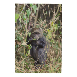 Blue Monkey Eating Wood Wall Decor