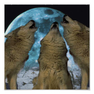BLUE MOON WOLVES HOWLING CANVAS PRINT