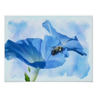 Blue Morning Glory and Bumblebee Poster