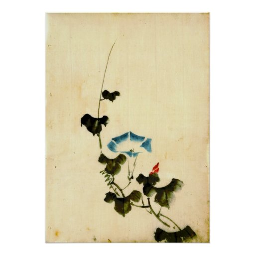 Blue Morning Glory Vine 1840 Posters
