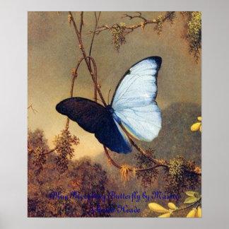 Blue Morphing Butterfly Framed Print
