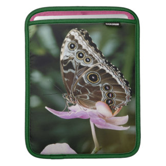 Blue Morpho Butterfly iPad Sleeve