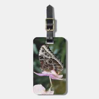Blue Morpho Butterfly Luggage Tag