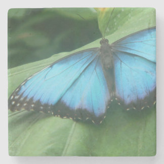 Blue Morpho Butterfly Stone Beverage Coaster