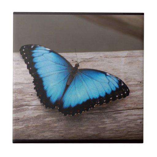 Blue Morpho Butterfly Ceramic Tiles