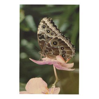Blue Morpho Butterfly Wood Wall Decor