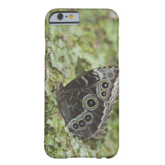 Blue Morpho, Morpho menelaus, adult newly 2 Barely There iPhone 6 Case
