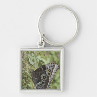 Blue Morpho, Morpho menelaus, adult newly 2 Silver-Colored Square Key Ring