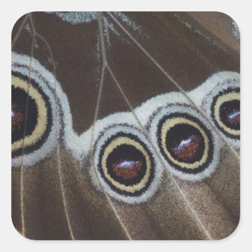 Blue Morpho, Morpho menelaus, adult newly Stickers