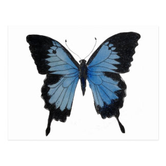 Blue Mountain Swallowtail butterfly on items Postcard
