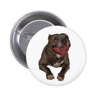 Blue Nose Pitbull Button