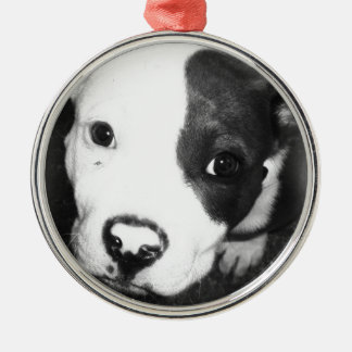 Blue Nose Pitbull Puppy Christmas Ornament