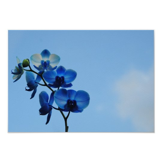 Blue orchid card