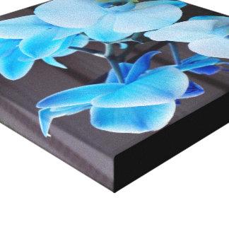 Blue Orchid Flower Canvas Print