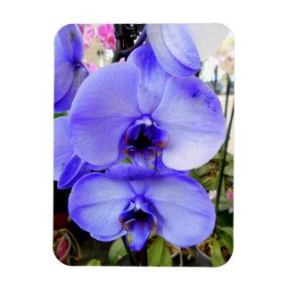 Blue Orchids Magnet