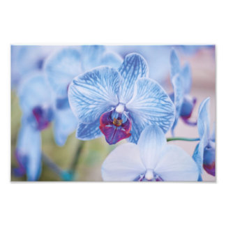 Blue Orchids Photo Print