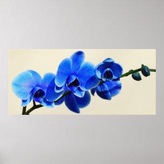 Blue orchids print
