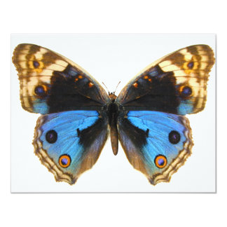 Blue Pansy Butterfly 11 Cm X 14 Cm Invitation Card