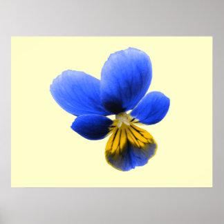 Blue Pansy Print