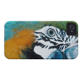 Blue Parrot iPhone 4 Cover