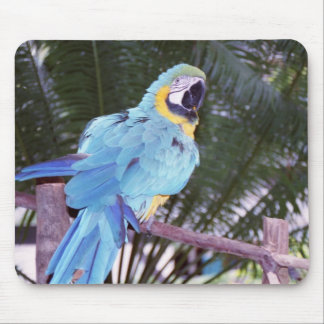 blue parrot mouse mat