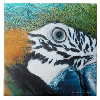 Blue Parrot Tile
